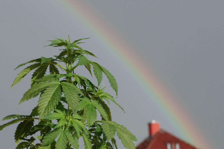 Ferdi speaks to OFM about the marijuana ruling